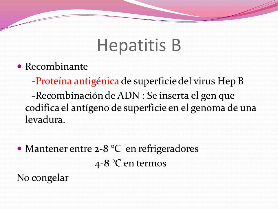 Hepatitis B Recombinante