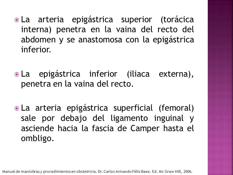 La arteria epigástrica superior (torácica interna) penetra en la vaina del recto del abdomen y se anastomosa con la epigástrica inferior.