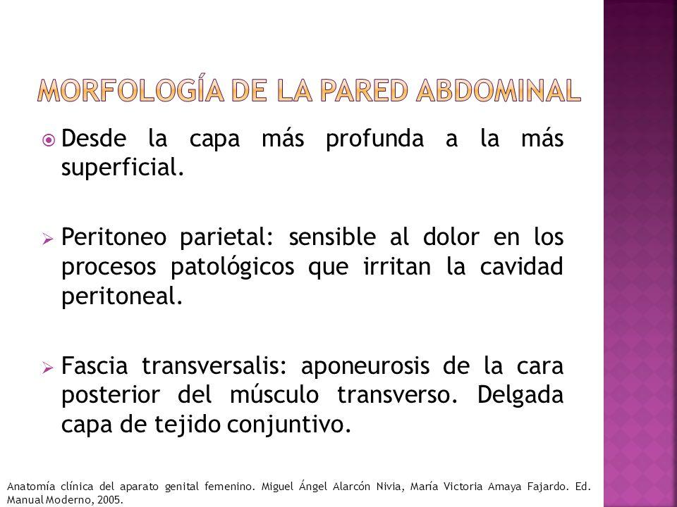 Morfología de la pared abdominal