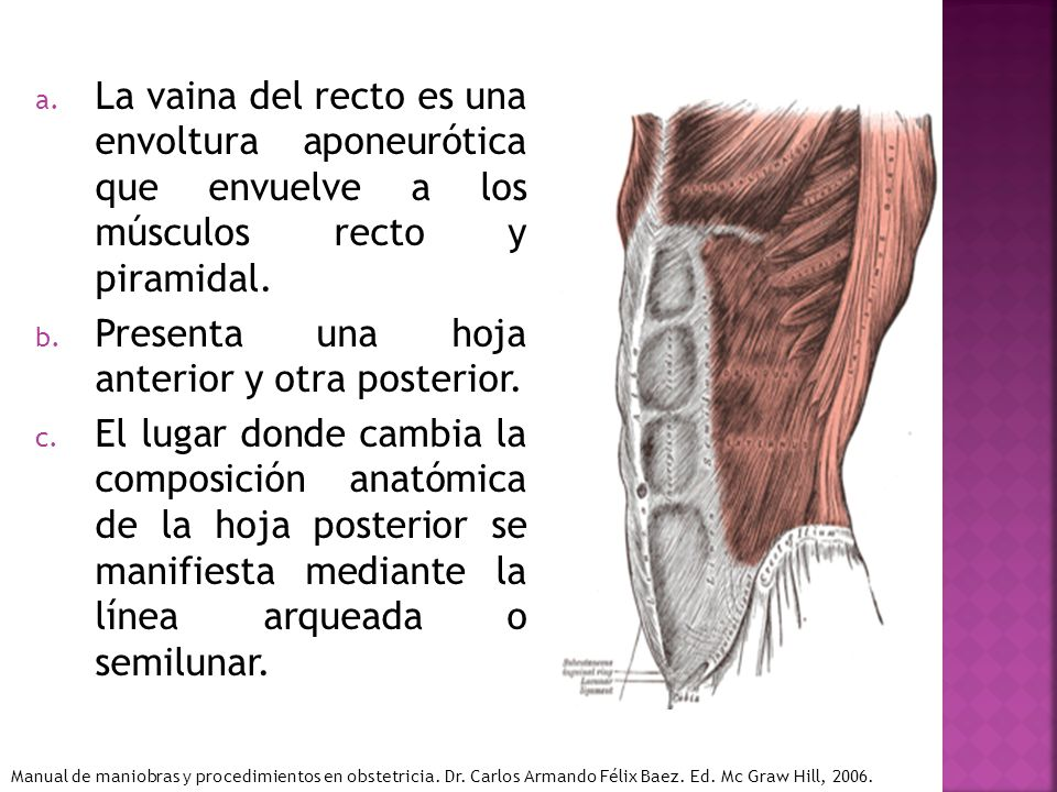 Presenta una hoja anterior y otra posterior.