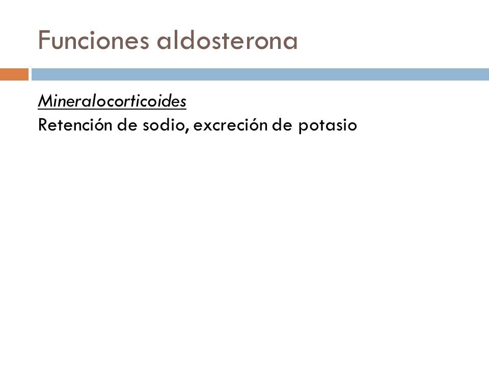Funciones aldosterona