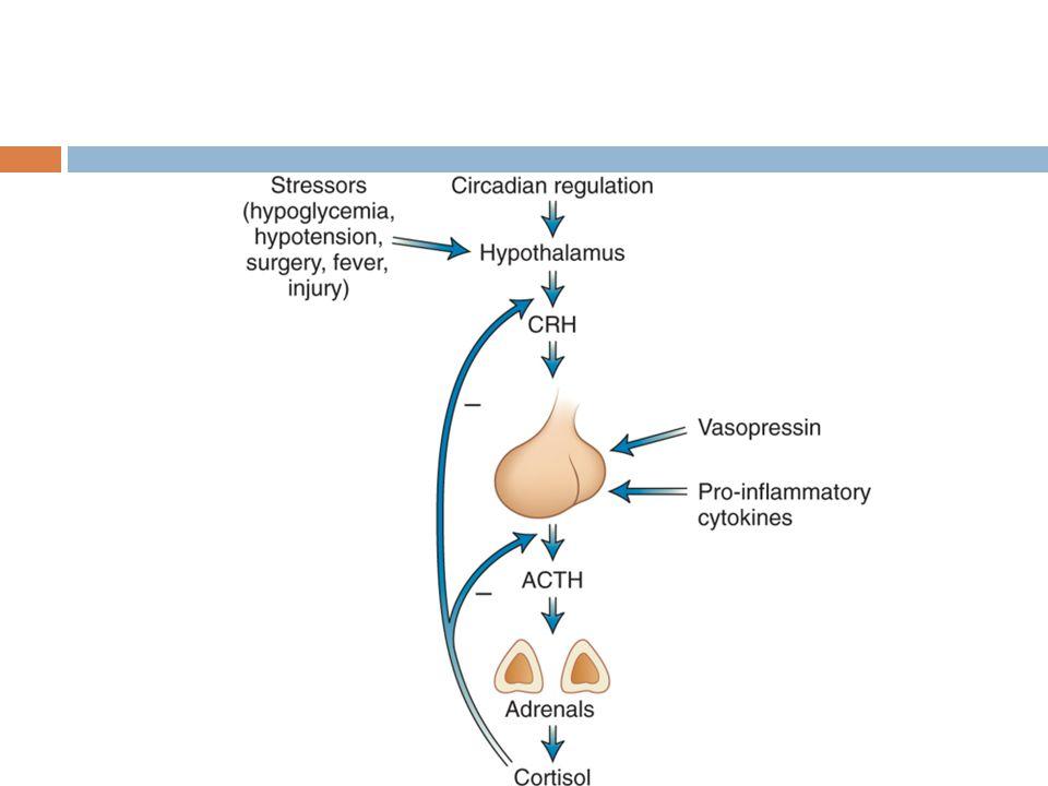 CRH hormona liberadora de corticotropina