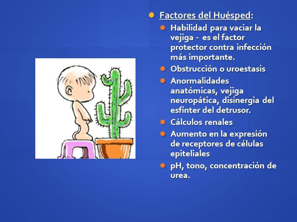 Factores del Huésped: Habilidad para vaciar la vejiga - es el factor protector contra infección más importante.