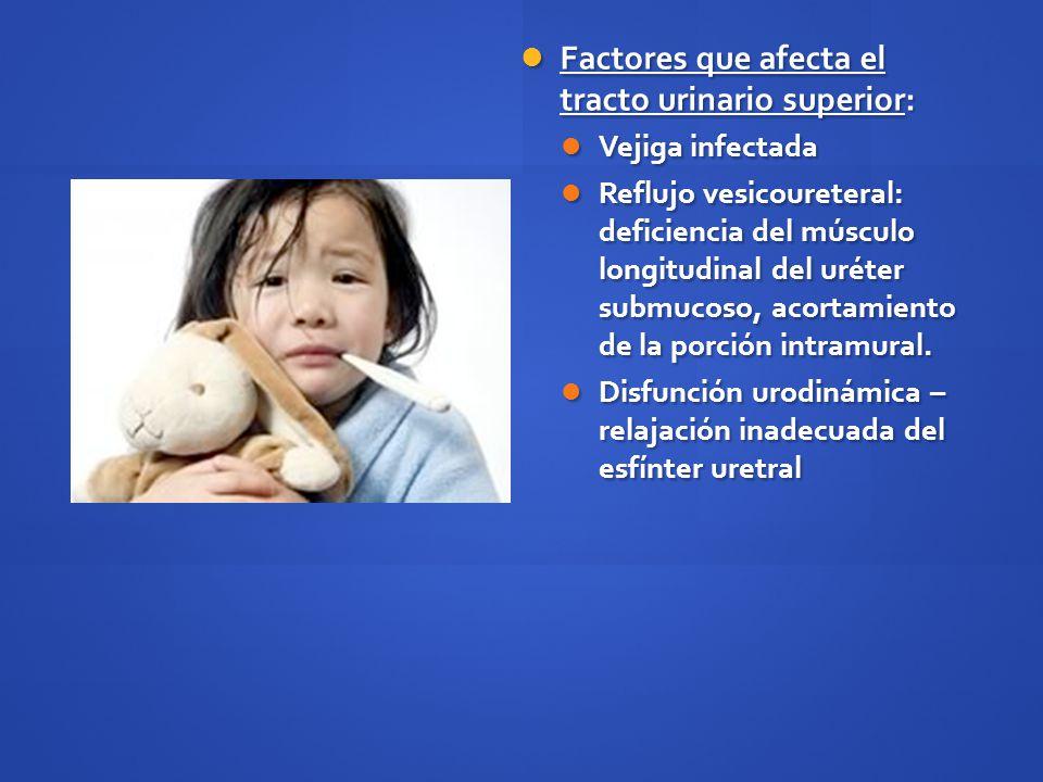 Factores que afecta el tracto urinario superior: