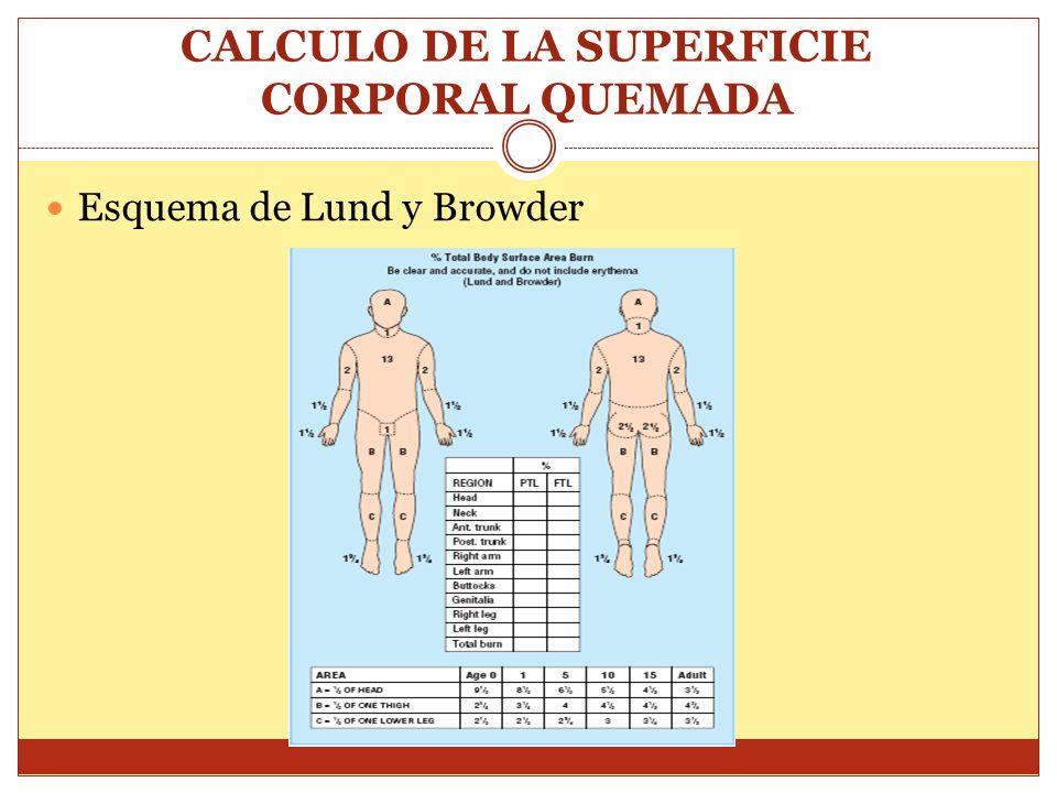 CALCULO DE LA SUPERFICIE CORPORAL QUEMADA