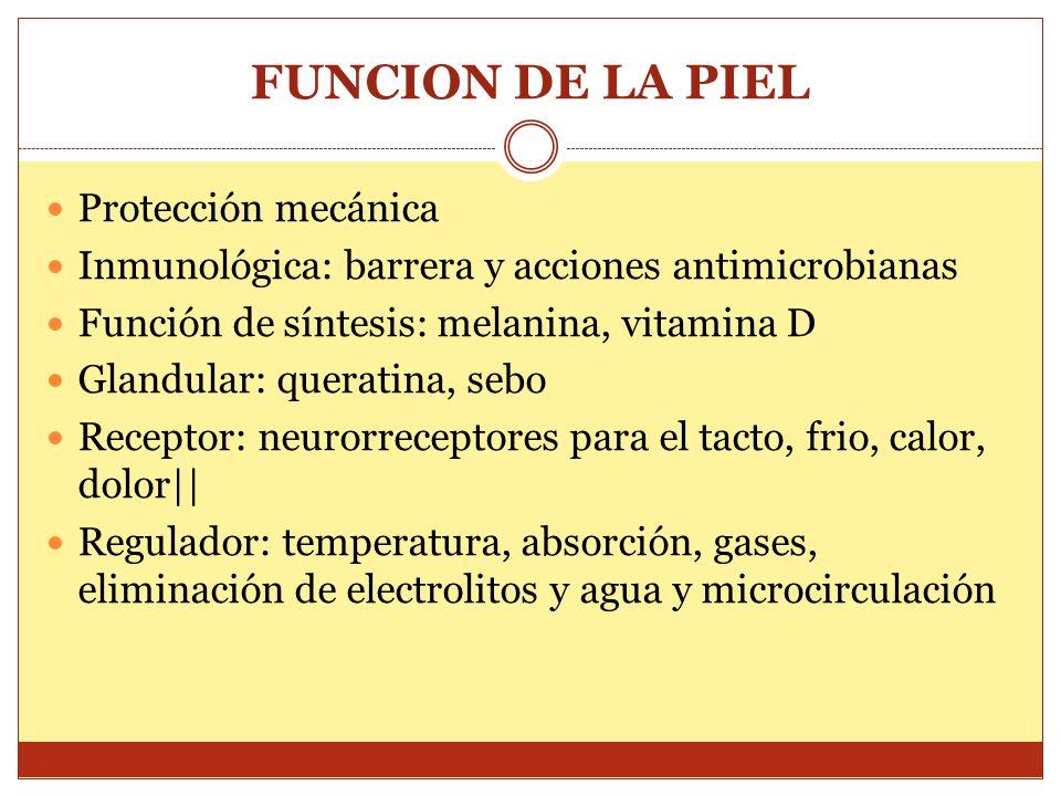 FUNCION DE LA PIEL Protección mecánica