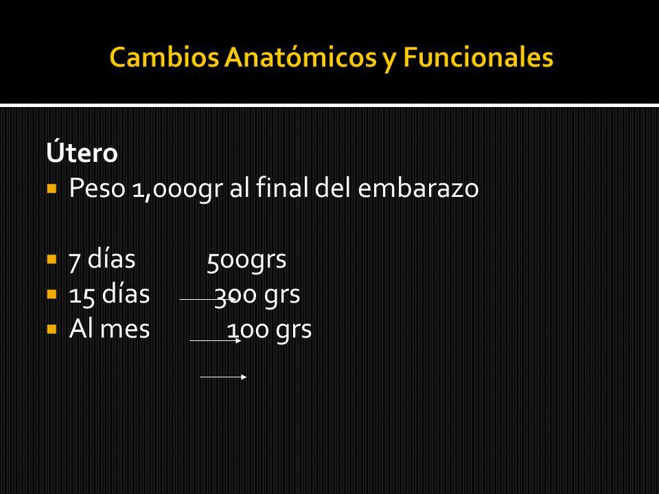 Cambios Anatómicos y Funcionales