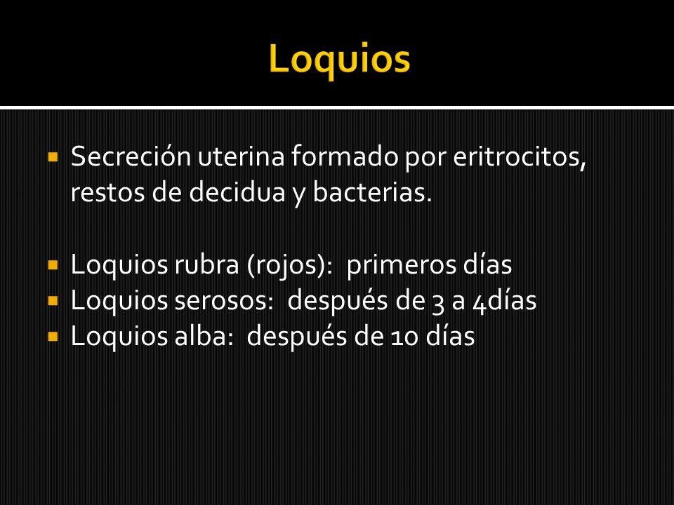 Loquios Secreción uterina formado por eritrocitos, restos de decidua y bacterias. Loquios rubra (rojos): primeros días.