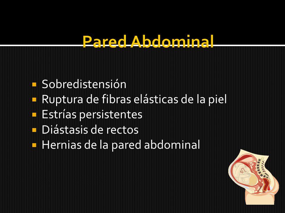 Pared Abdominal Sobredistensión Ruptura de fibras elásticas de la piel