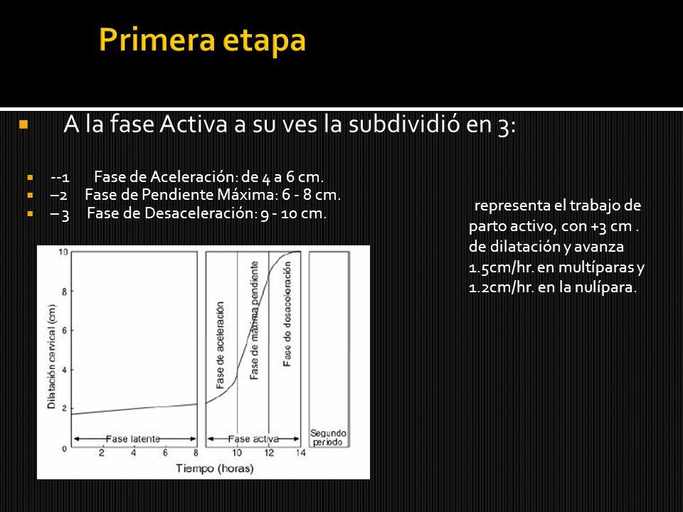 Primera etapa A la fase Activa a su ves la subdividió en 3: