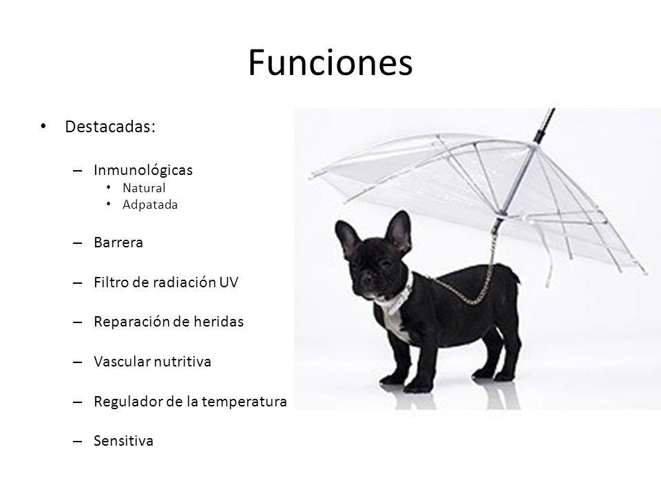 Funciones Destacadas: Inmunológicas Barrera Filtro de radiación UV