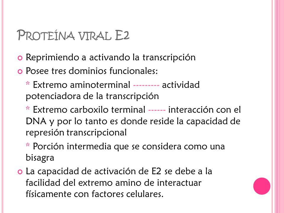 Proteína viral E2 Reprimiendo a activando la transcripción