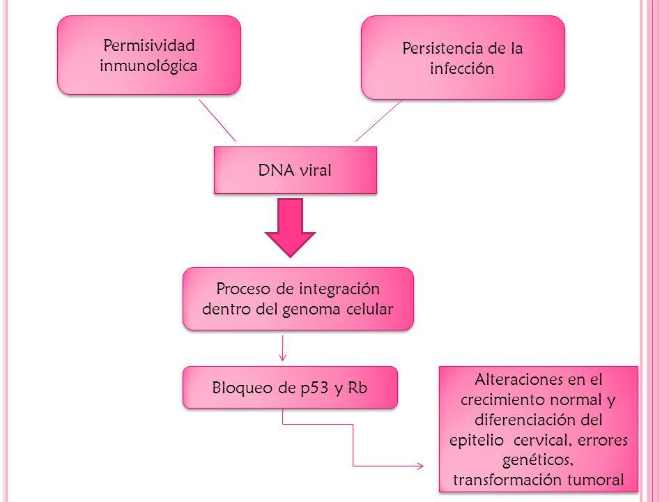 Permisividad inmunológica Persistencia de la infección