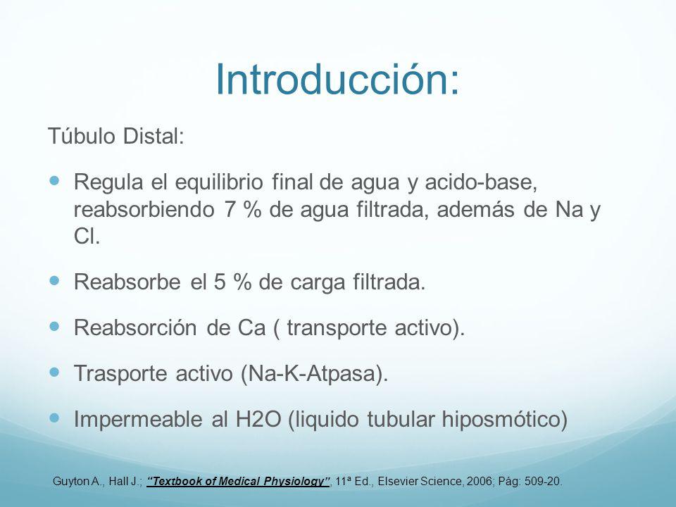 Introducción: Túbulo Distal: