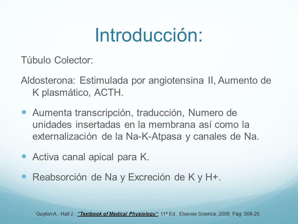 Introducción: Túbulo Colector:
