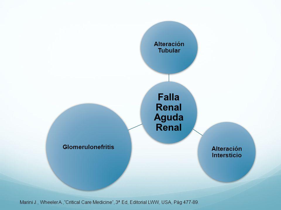 Falla Renal Aguda Renal Alteración Intersticio