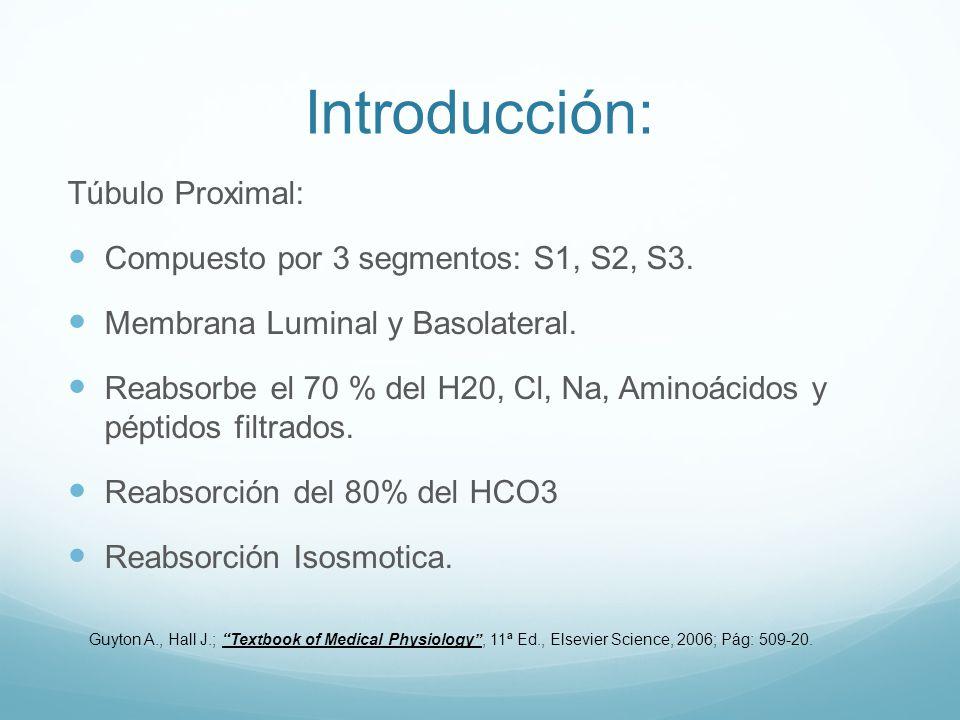 Introducción: Túbulo Proximal: Compuesto por 3 segmentos: S1, S2, S3.