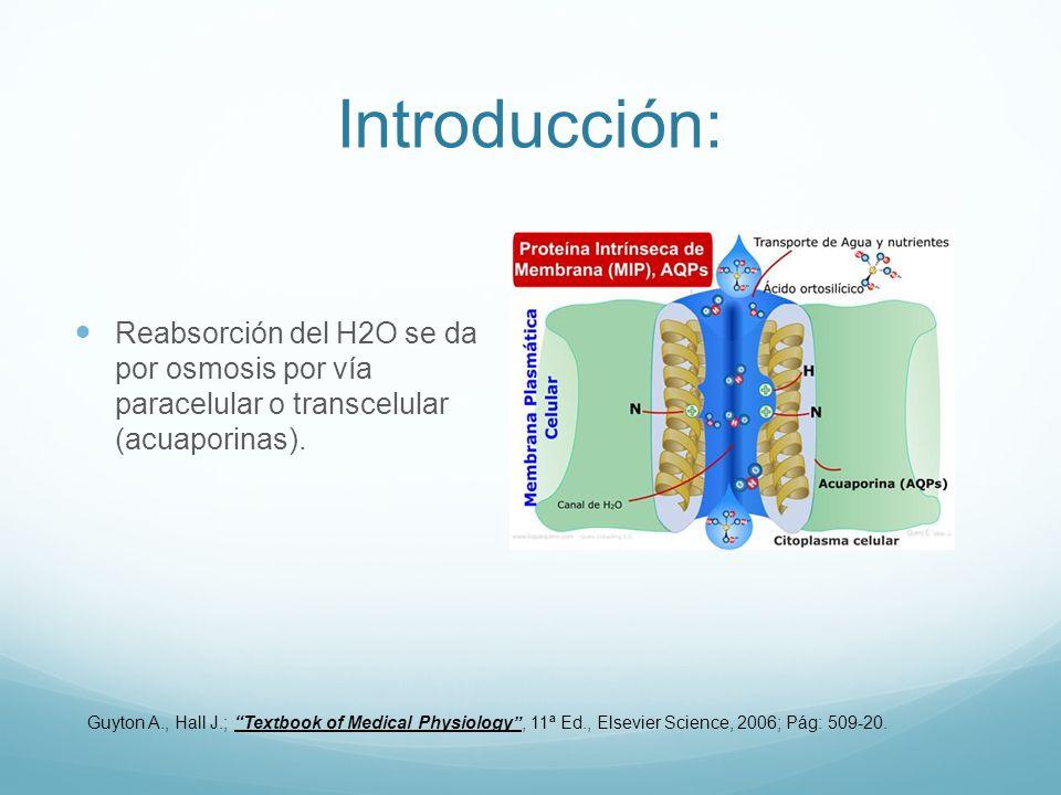 Introducción: Reabsorción del H2O se da por osmosis por vía paracelular o transcelular (acuaporinas).