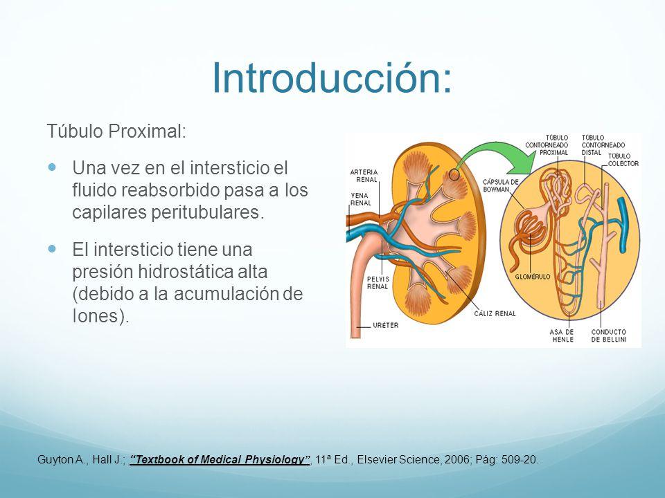 Introducción: Túbulo Proximal: