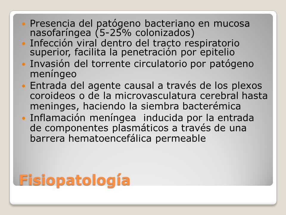 Presencia del patógeno bacteriano en mucosa nasofaríngea (5-25% colonizados)