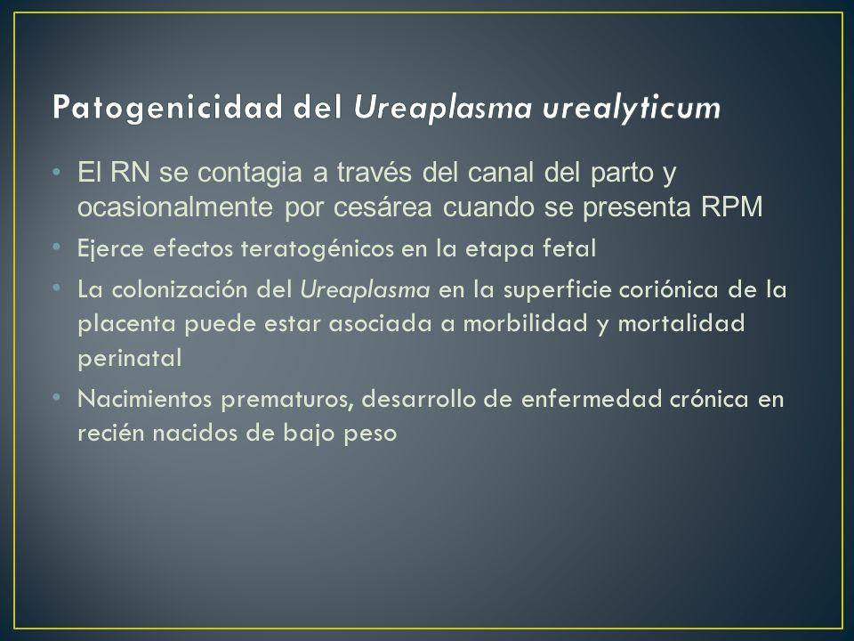 Patogenicidad del Ureaplasma urealyticum