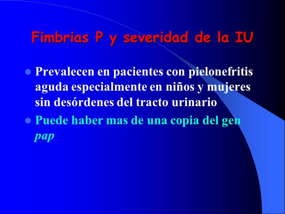 Fimbrias P y severidad de la IU
