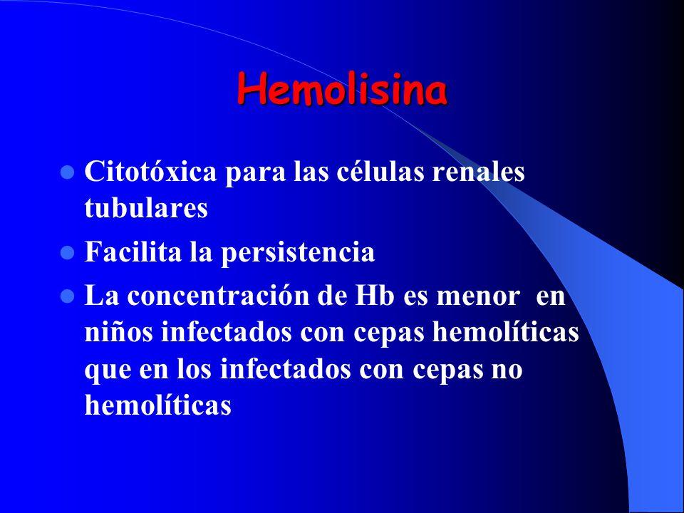 Hemolisina Citotóxica para las células renales tubulares