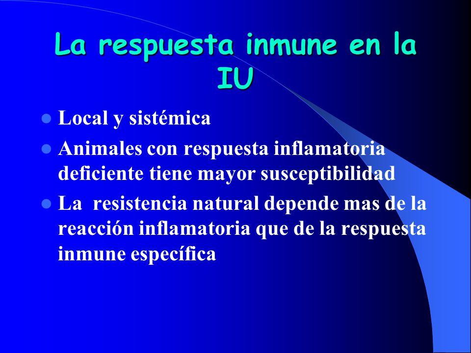 La respuesta inmune en la IU