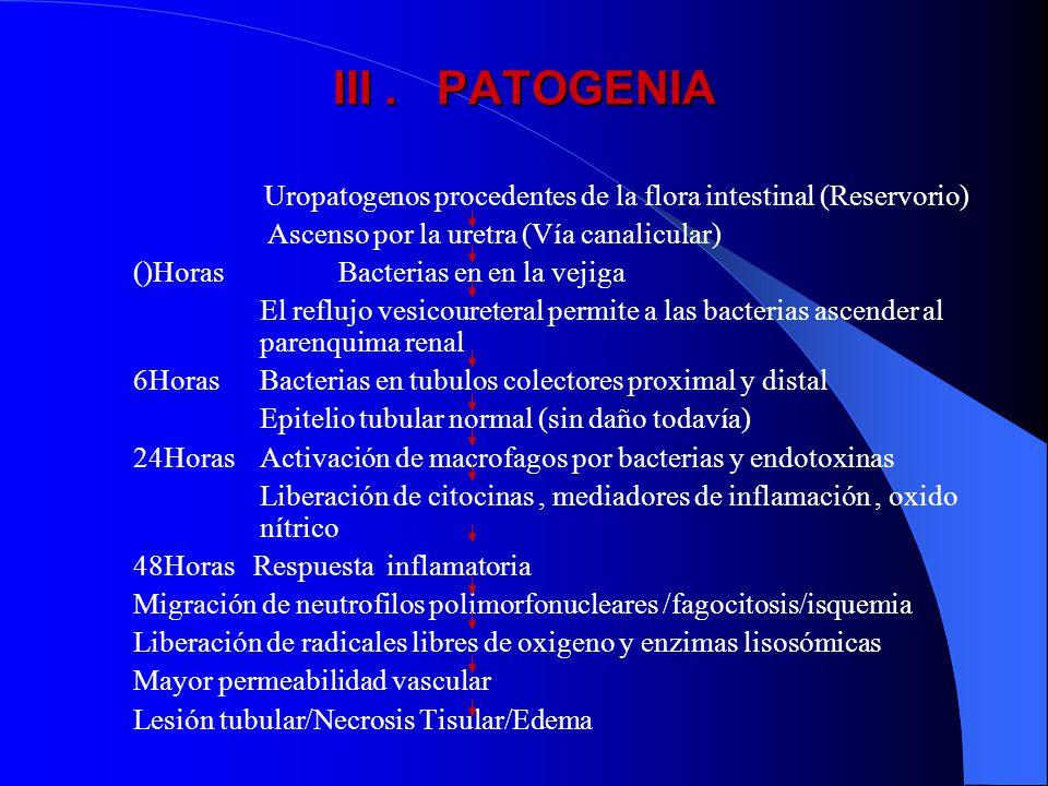 III . PATOGENIA Ascenso por la uretra (Vía canalicular)