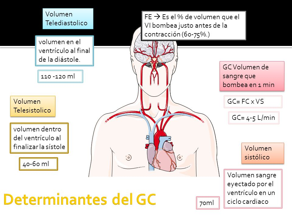 Determinantes del GC Volumen Telediastolico