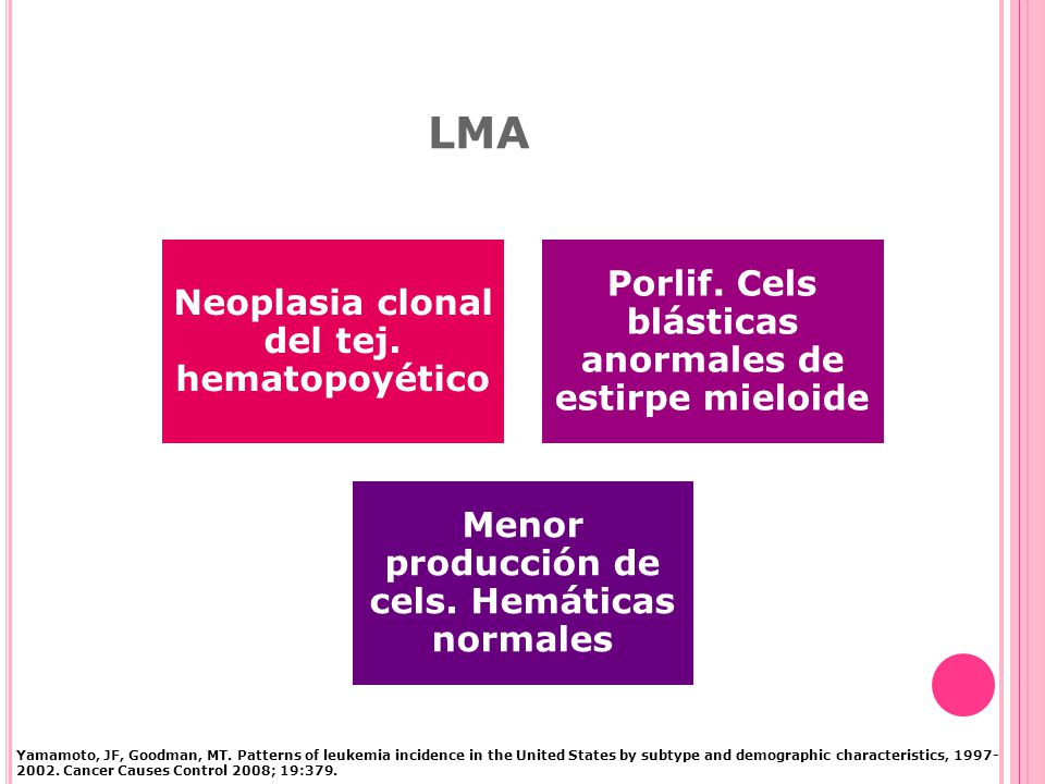 LMA Porlif. Cels blásticas anormales de estirpe mieloide