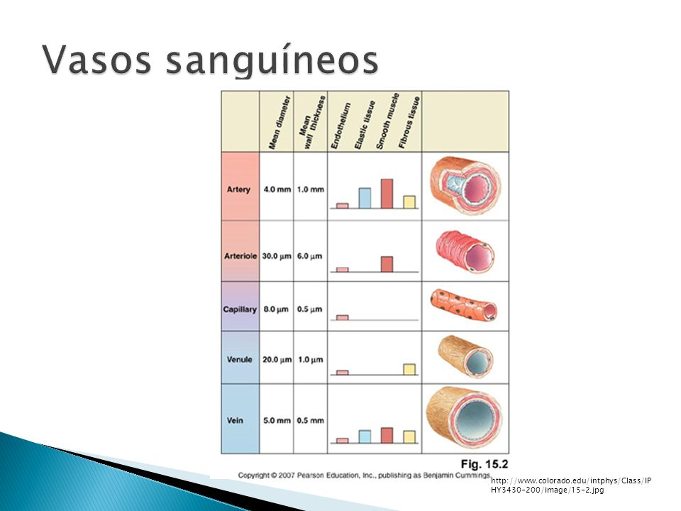 Vasos sanguíneos http://www.colorado.edu/intphys/Class/IPHY3430-200/image/15-2.jpg