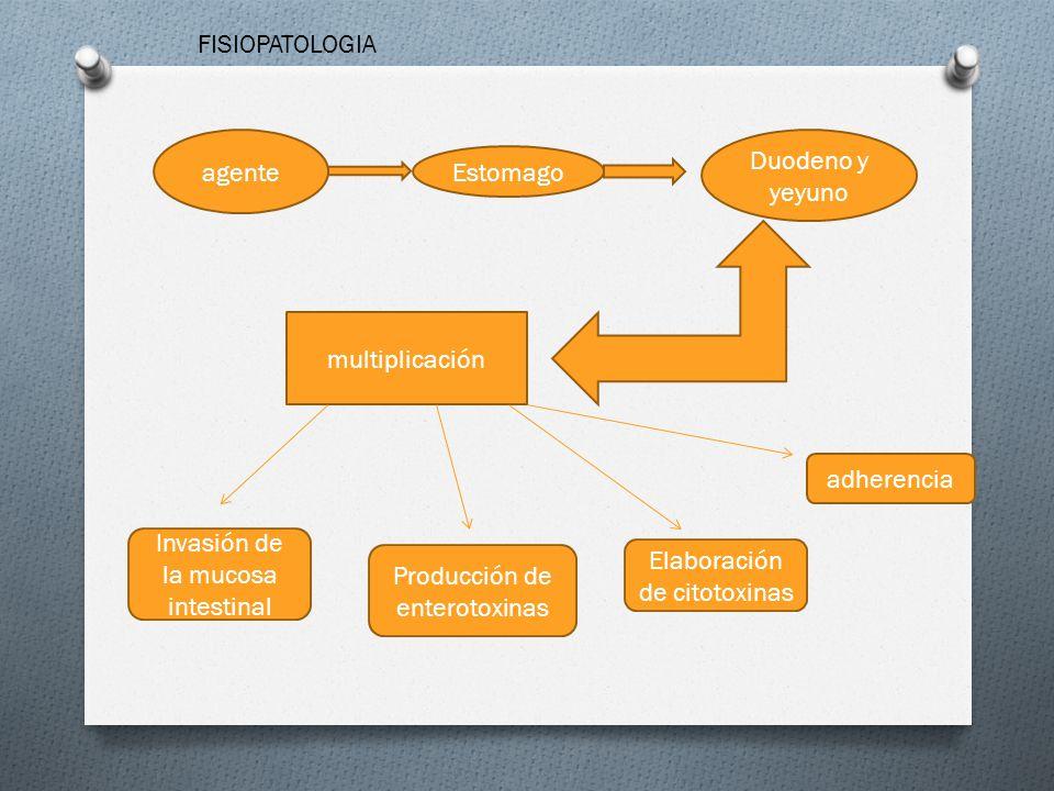 Invasión de la mucosa intestinal Producción de enterotoxinas