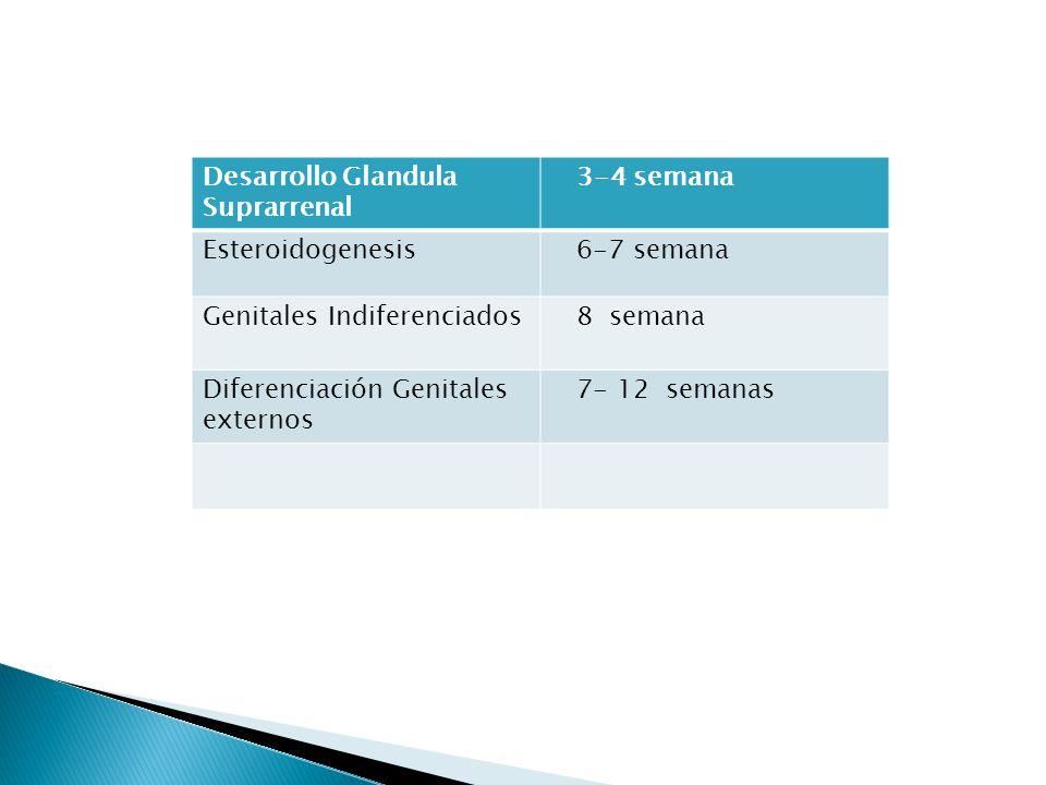 Desarrollo Glandula Suprarrenal