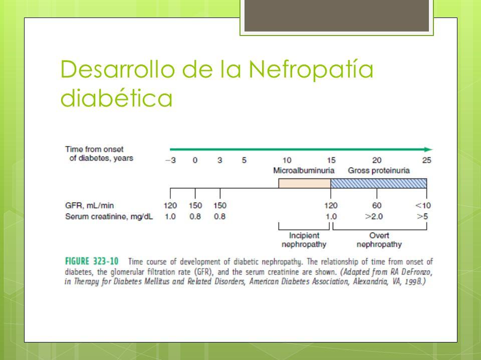 Desarrollo de la Nefropatía diabética