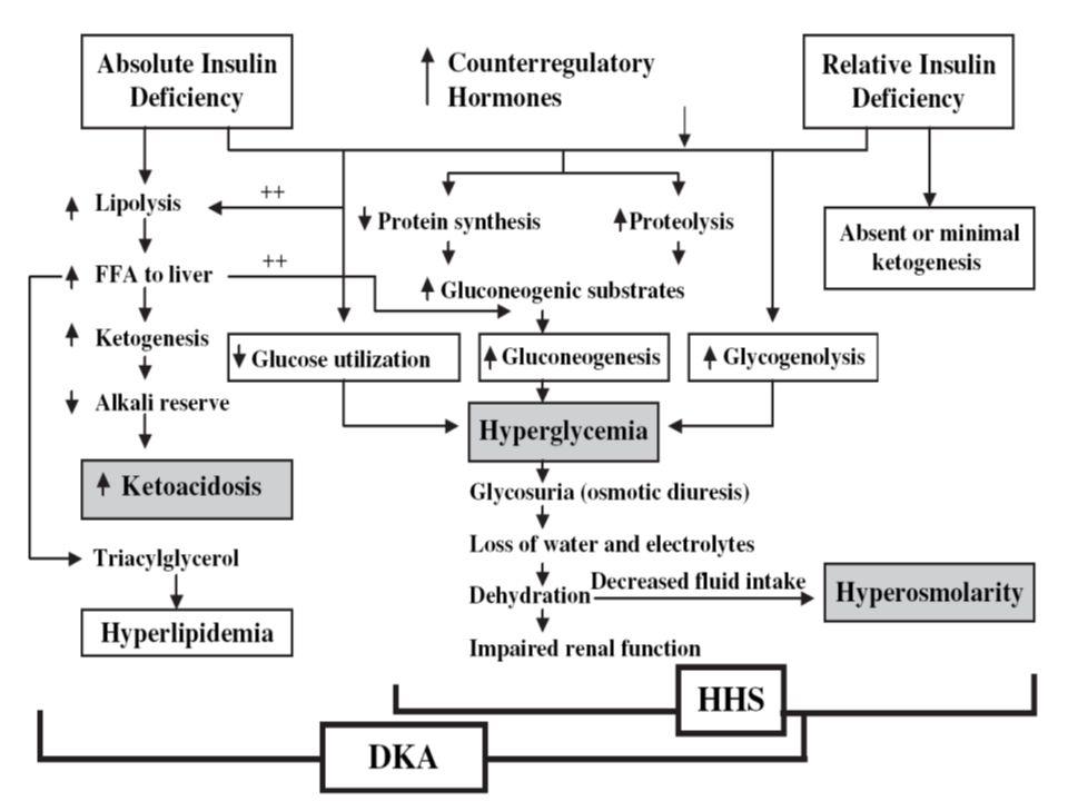 Estado Hiperosmolar Complicaciones Acontece más en paciente DM tipo 2.