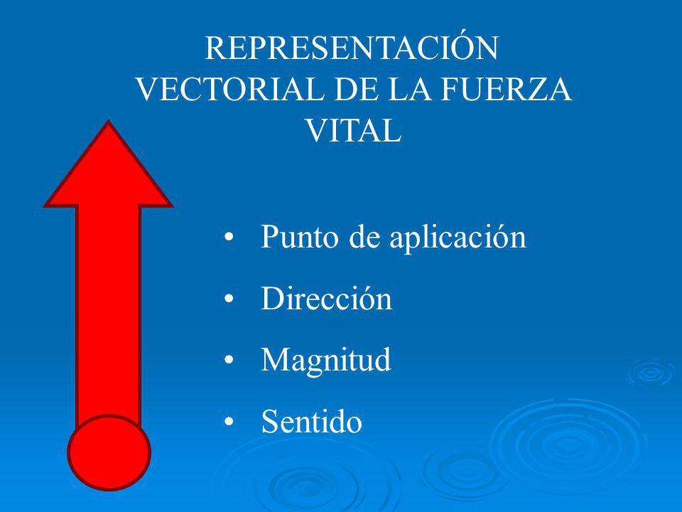 REPRESENTACIÓN VECTORIAL DE LA FUERZA VITAL