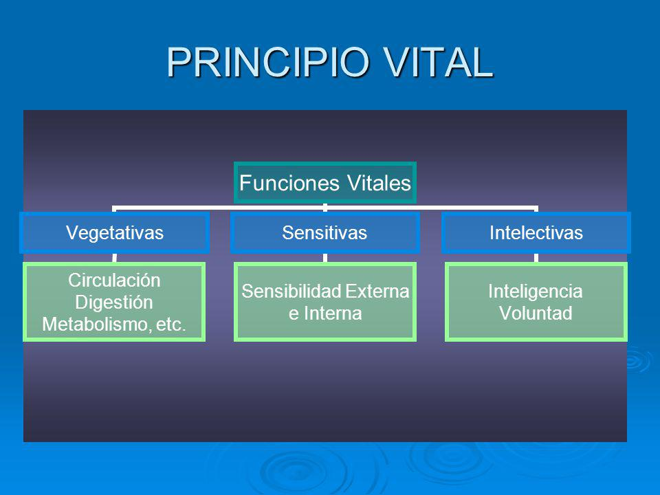 PRINCIPIO VITAL