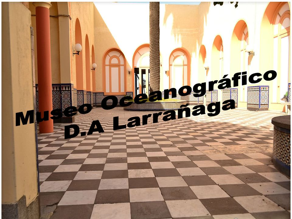 Museo Oceanográfico D.A Larrañaga