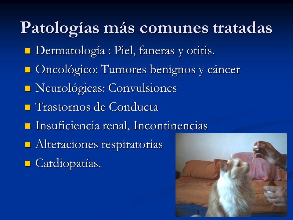 Patologías más comunes tratadas