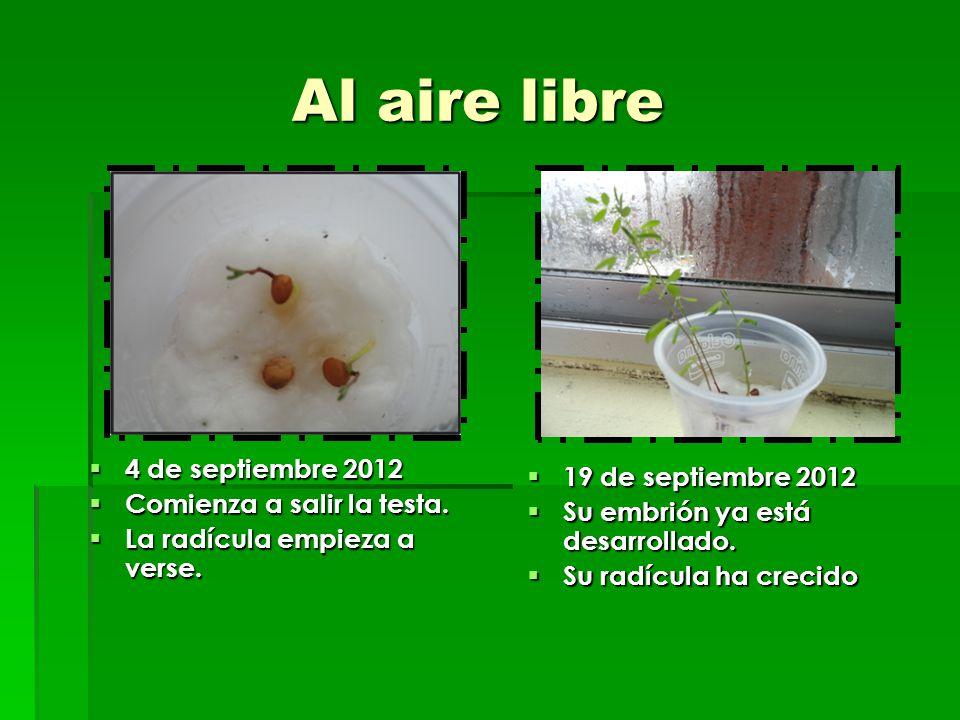 Al aire libre 4 de septiembre 2012 19 de septiembre 2012