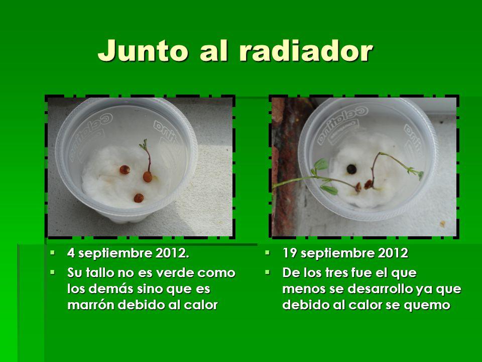 Junto al radiador 4 septiembre 2012.