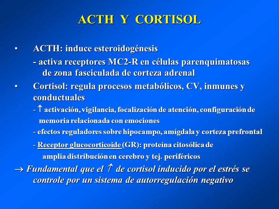 ACTH Y CORTISOL ACTH: induce esteroidogénesis
