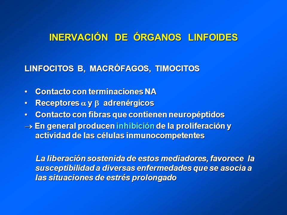INERVACIÓN DE ÓRGANOS LINFOIDES