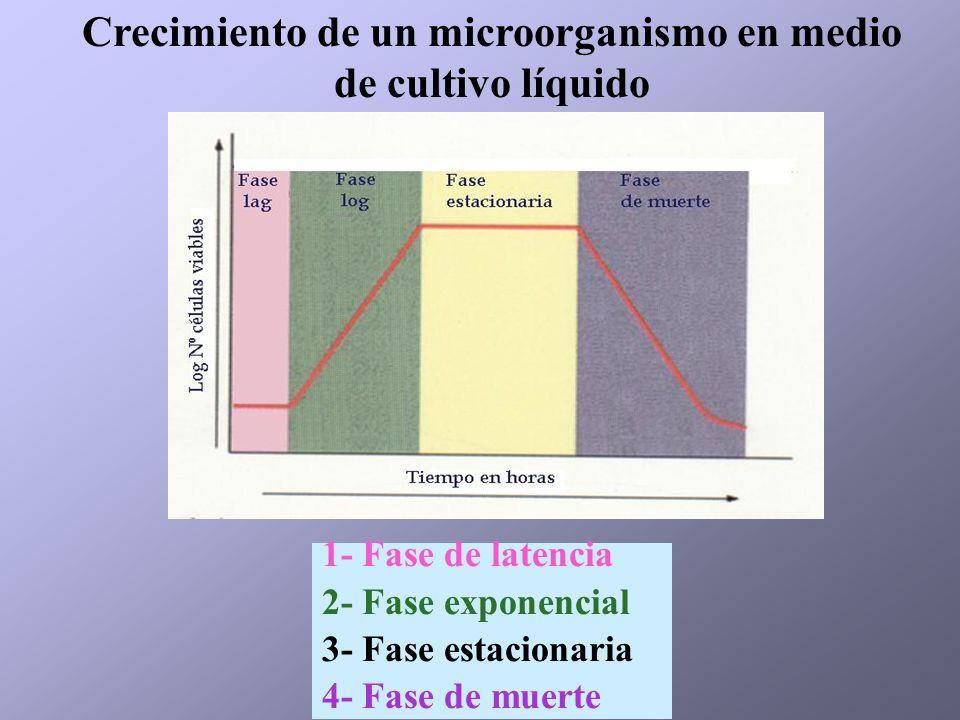 Crecimiento de un microorganismo en medio de cultivo líquido