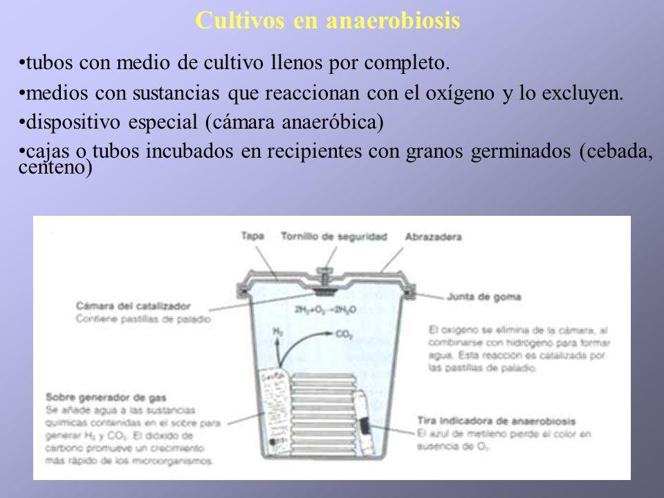 Cultivos en anaerobiosis