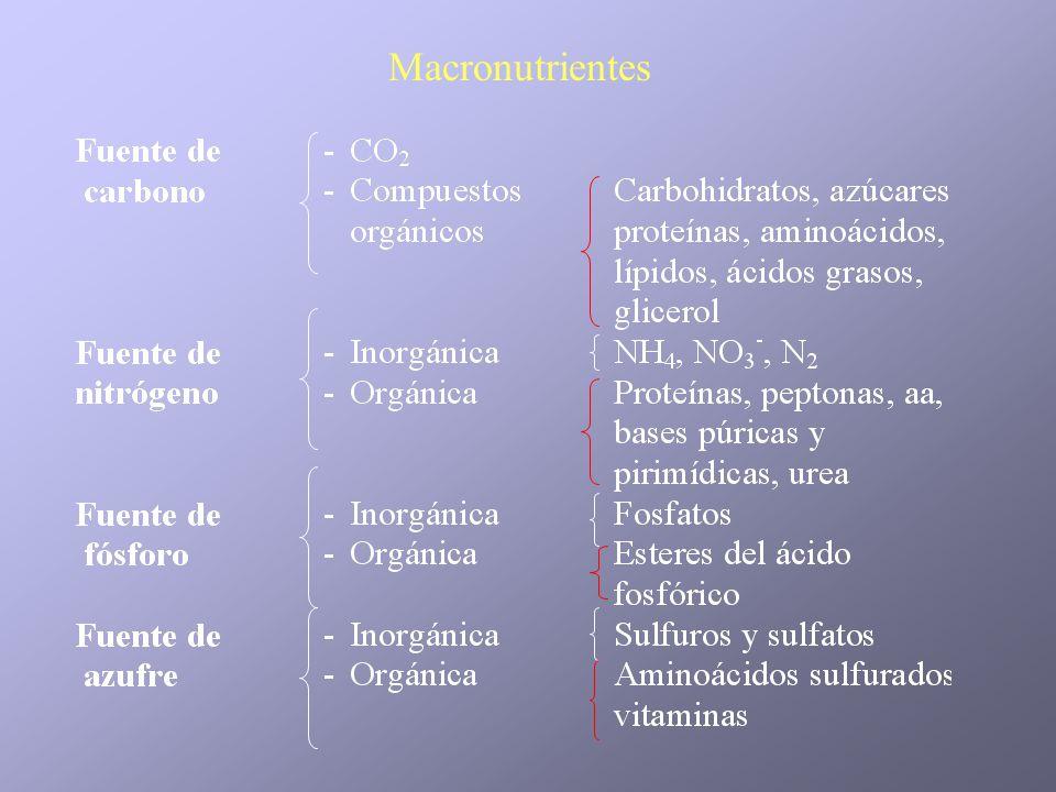 Macronutrientes