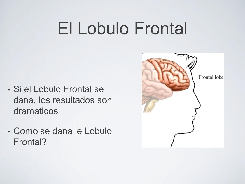 El Lobulo Frontal Si el Lobulo Frontal se dana, los resultados son dramaticos. Como se dana le Lobulo Frontal
