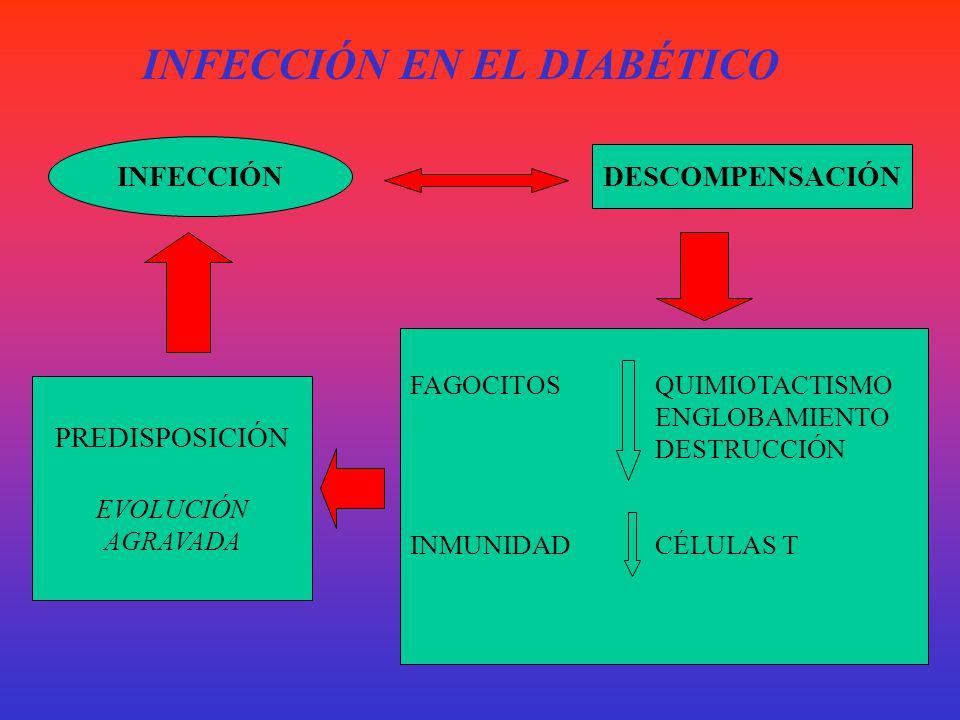 INFECCIÓN EN EL DIABÉTICO