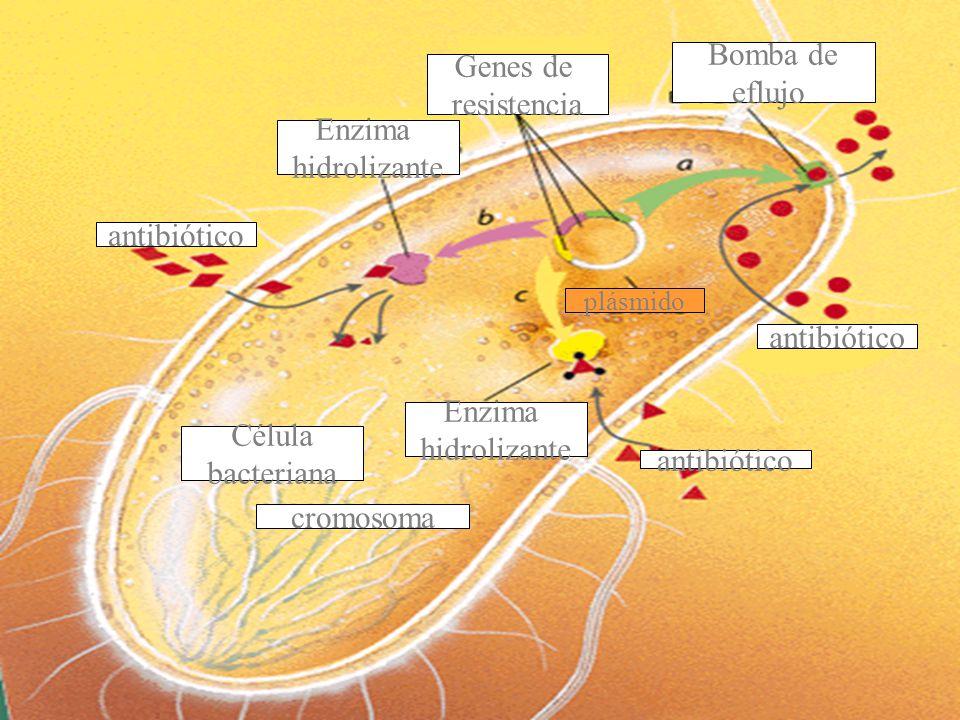 Bomba de Genes de eflujo resistencia Enzima hidrolizante antibiótico